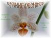 Logo Ryanne Orchidées