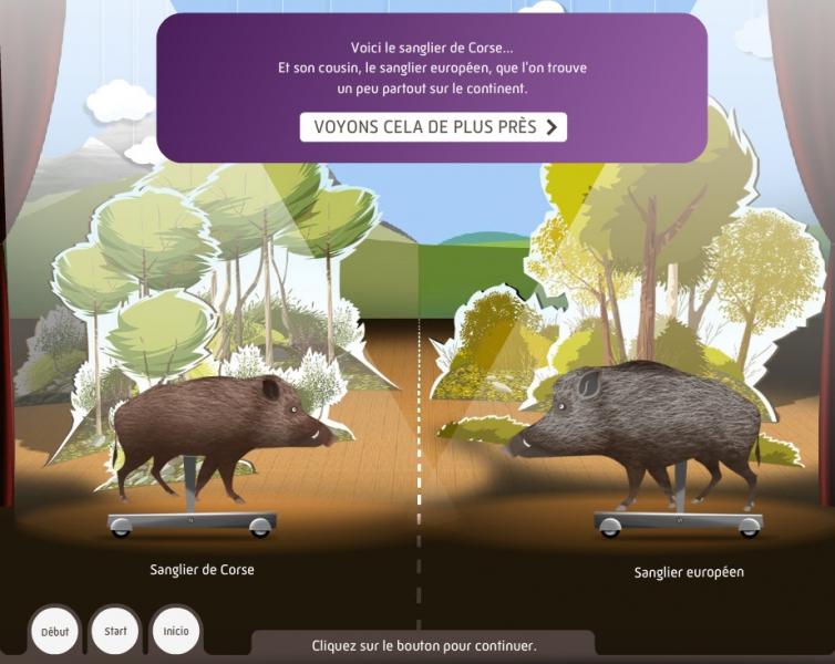 L'enquête corse : cochon ou sanglier ? - Dispositif multimedia de la Grande Galerie de l'Évolution