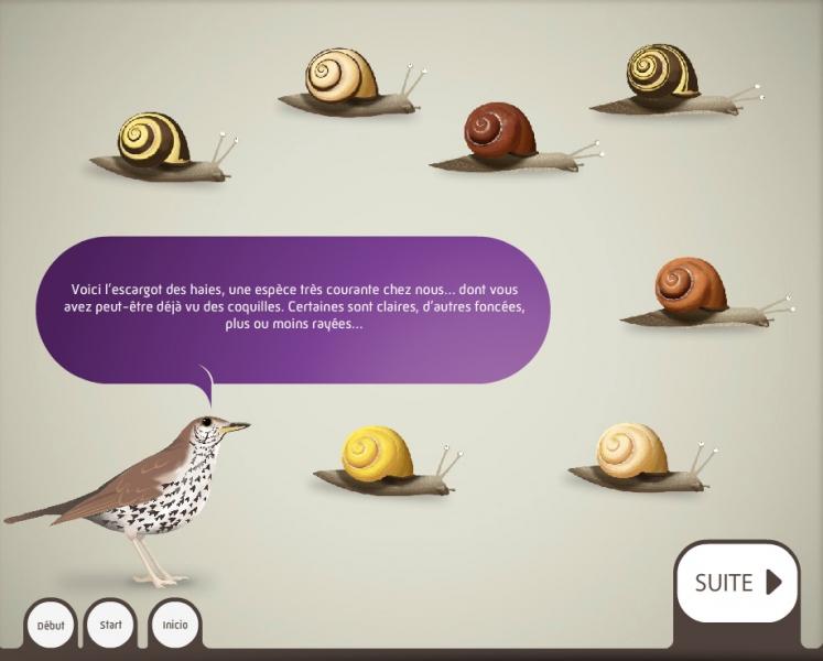 Escargots des haies - Dispositif multimedia de la Grande Galerie de l'Évolution