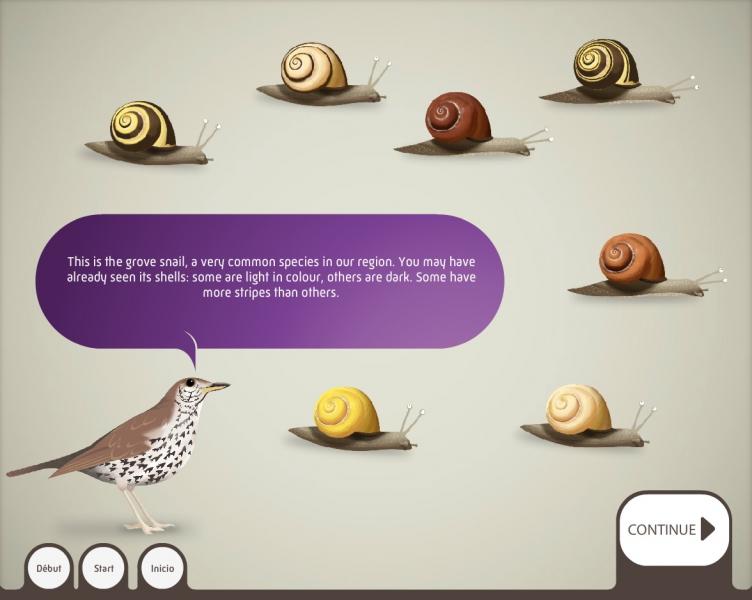 Grove snail - Media device of the Grande Galerie de l'Évolution