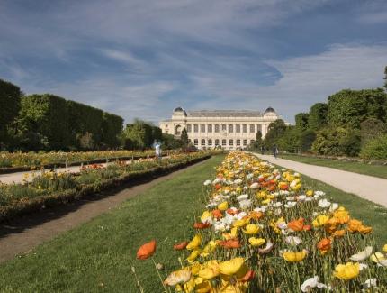 Perspective du Jardin des Plantes © MNHN - A. Iatzoura