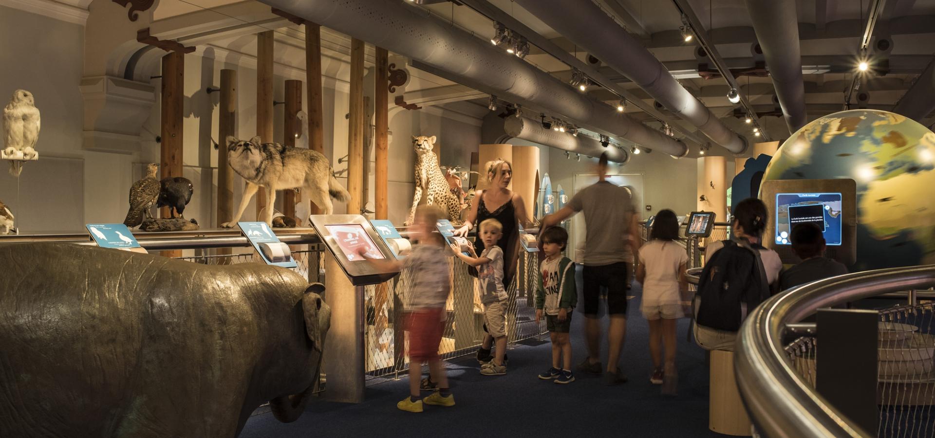 À la Galerie des enfants, la biodiversité se découvre en famille. Avis aux petits curieux et aux grands : animaux naturalisés et jeux interactifs les attendent. © MNHN – Agnès Iatzoura