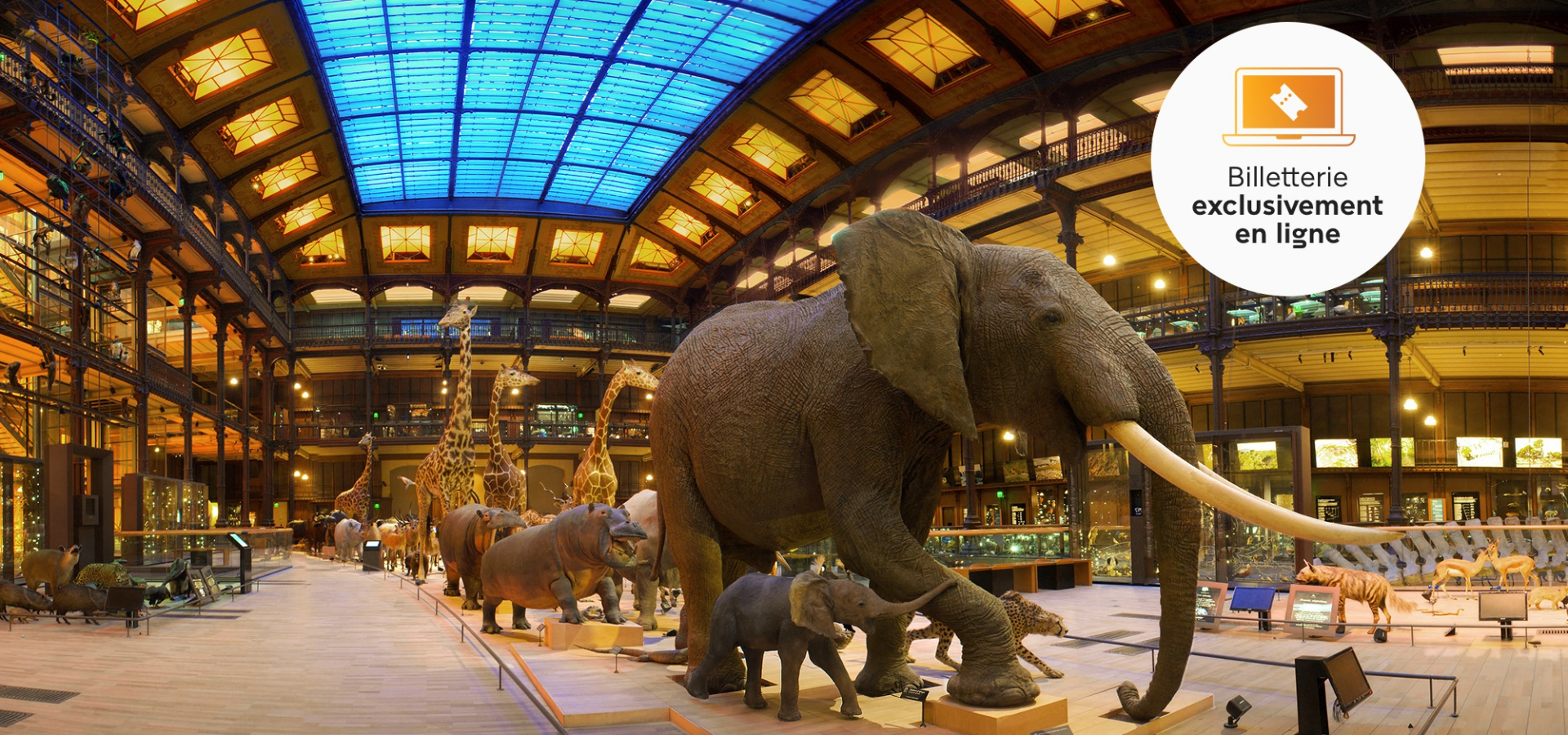 Caravane africaine, Grande Galerie de l'Evolution © MNHN – Bruno Jay