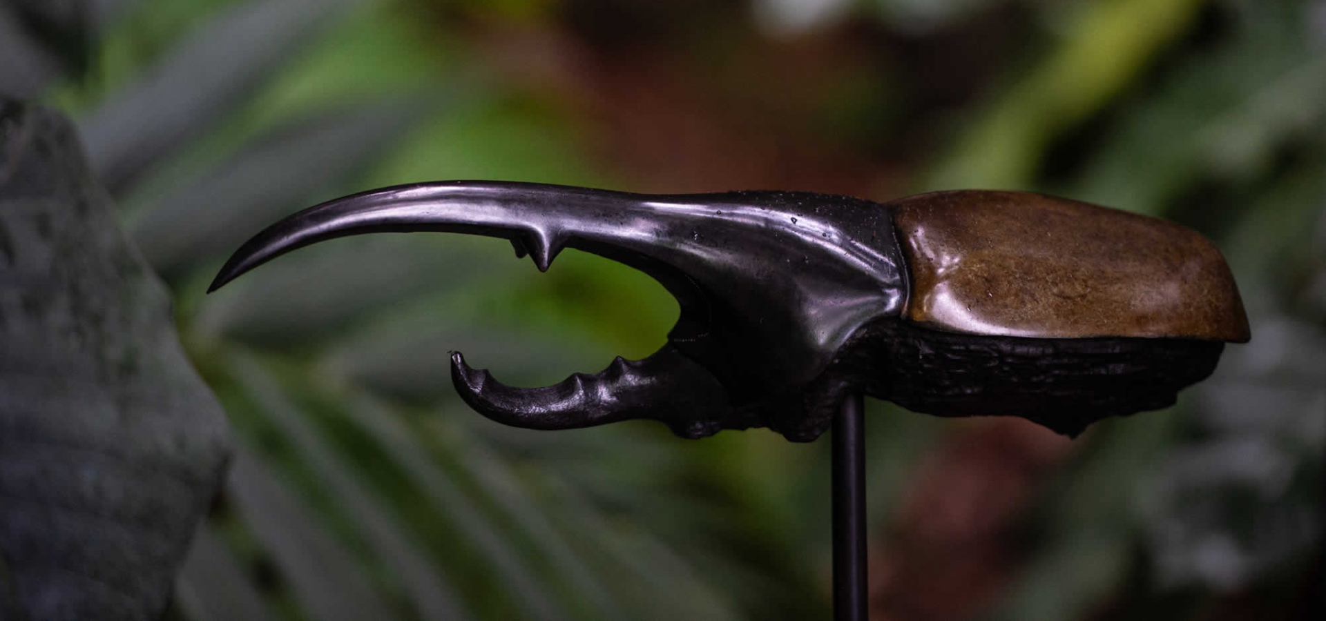 Carapaces et sortilèges, Bronze de François Chapelain-Midy © MNHN - F-G. Grandin