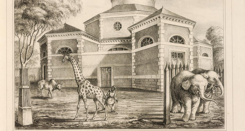 Rotonde de la Girafe et des Éléphants © MNHN - Bibliothèque centrale