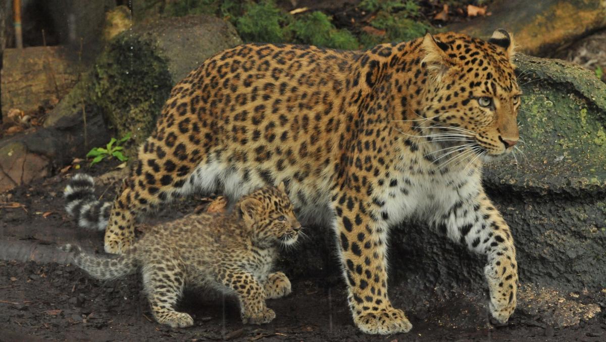 Menagerie Le Zoo Du Jardin Des Plantes Galeries Jardins Zoo