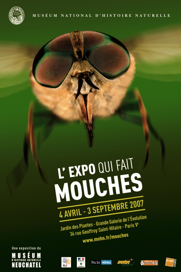 Exposition Mouche, l'expo qui fait mouche ! © MNHN