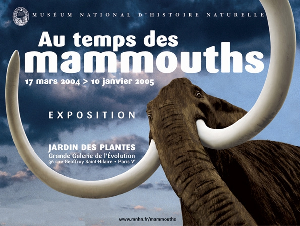 Le mammouth Félix © MNHN – Bernard Faye