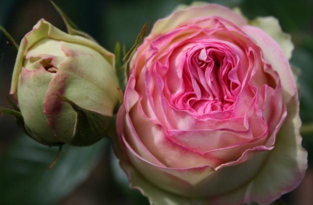 Jardin de roses et de roches © MNHN - Agathe Haevermans