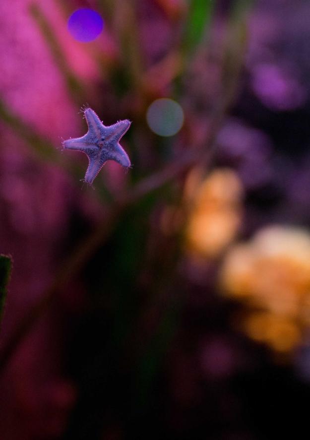 Concours Instagram océan - Photo lauréate 6e prix du Jury © Aurélie Belloir @aureliebelloirphoto