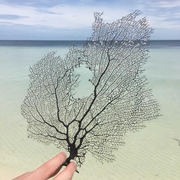 Concours Instagram océan - Photo lauréate 7e prix du Jury © Joseph Janiaud @jojaniaud