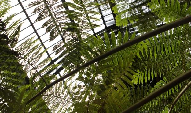 Serre de l'histoire des plantes © MNHN - Manuel Cohen