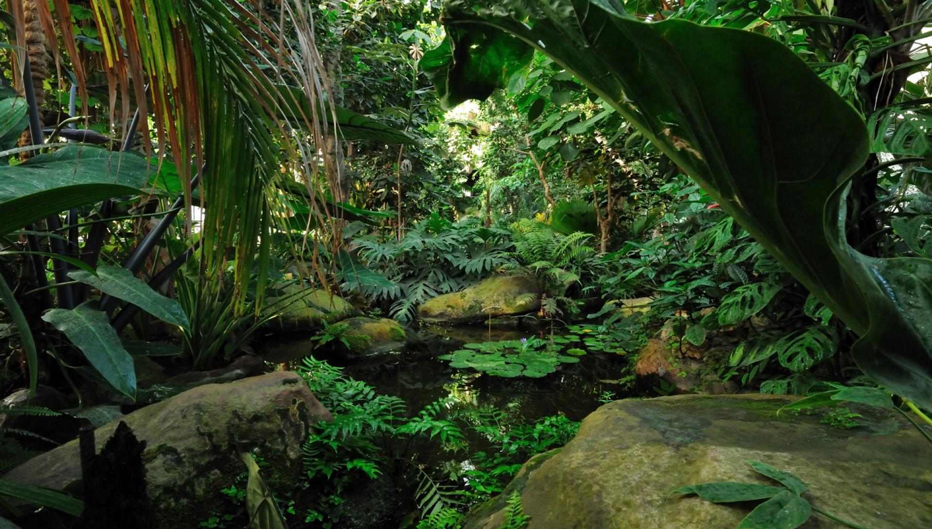 Grandes serres du Jardin des Plantes | Galeries, Jardins ...