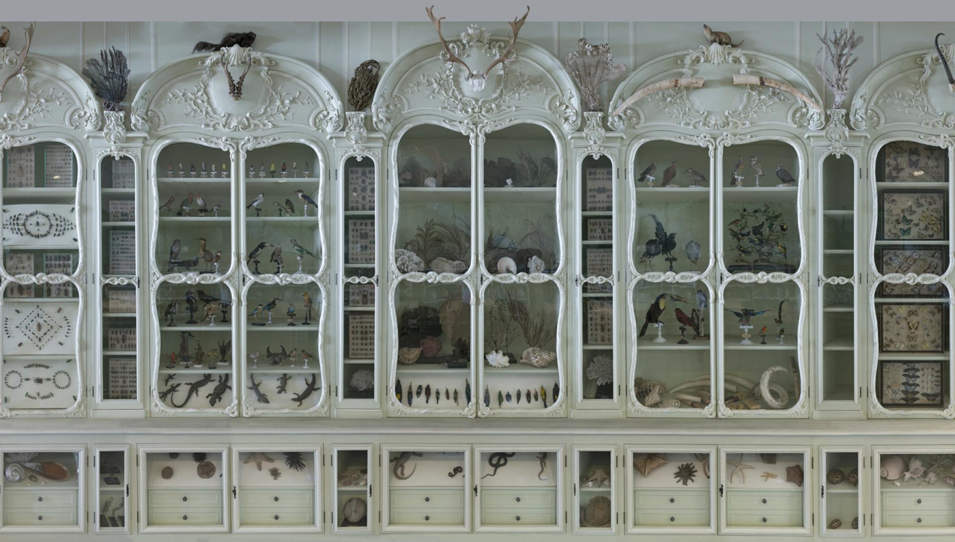 Bibliothèque centrale, Cabinet Bonnier de la Mosson © MNHN - JC Domench
