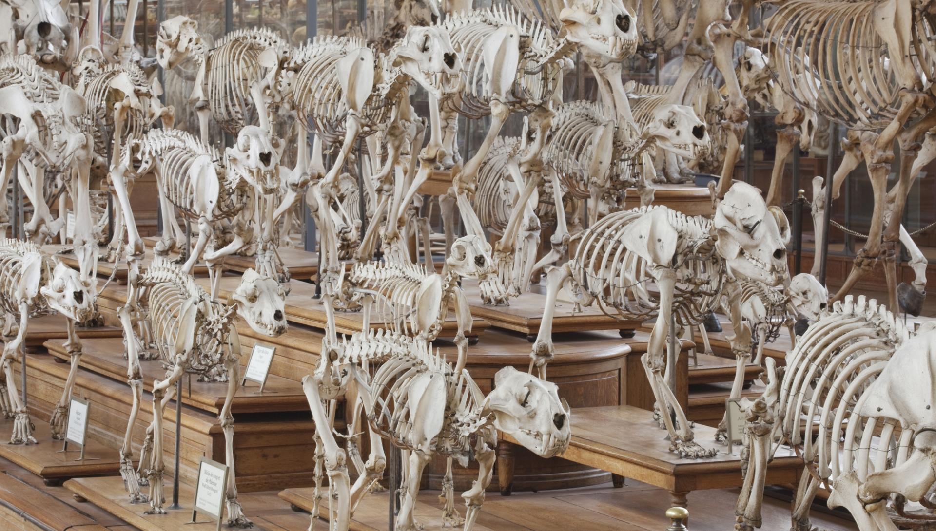 Galerie d'Anatomie comparée © MNHN - Bernard Faye