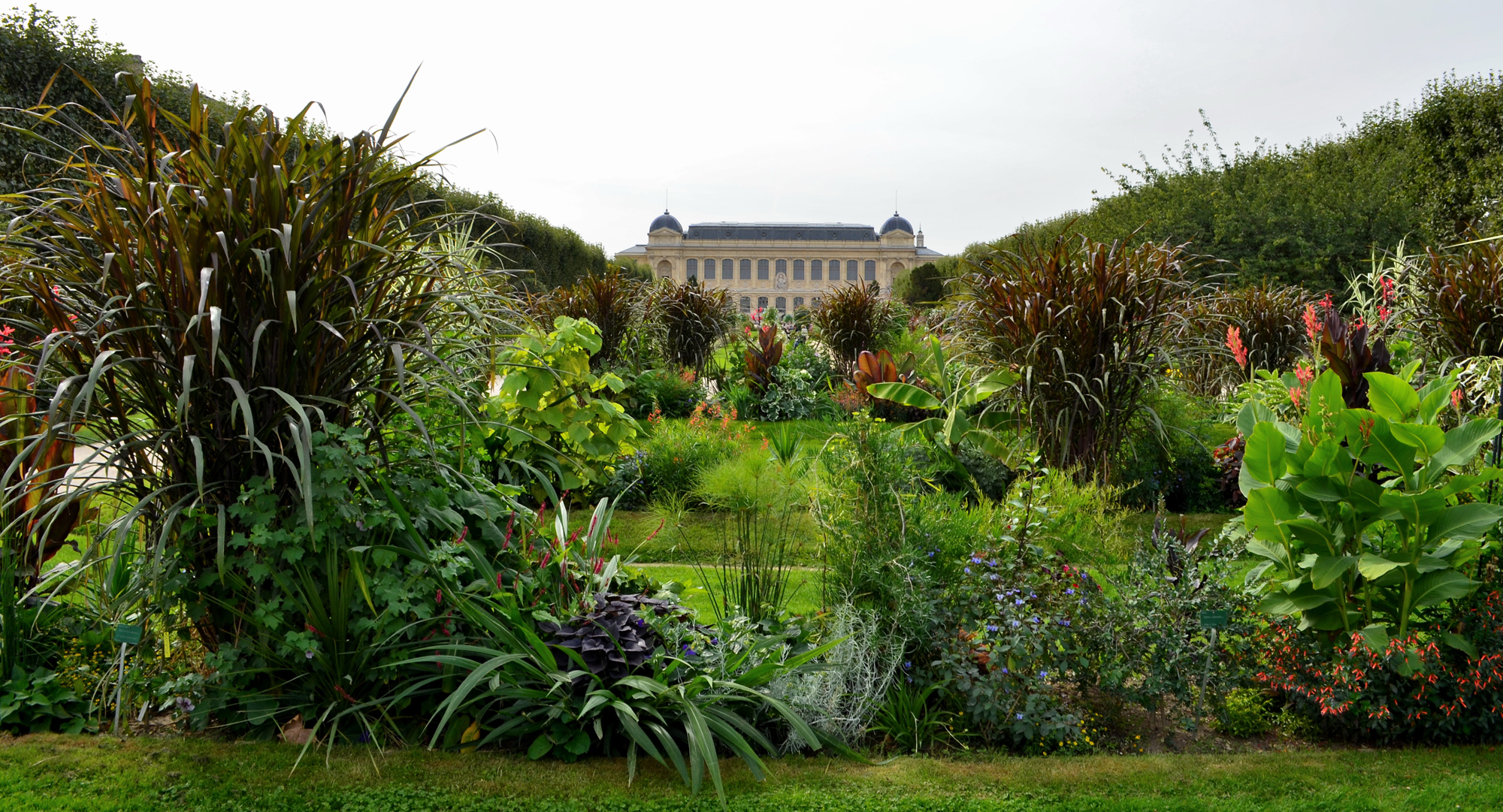 Plantes Pour Jardin Contemporain jardin des plantes | galeries, jardins, zoo - jardin des plantes
