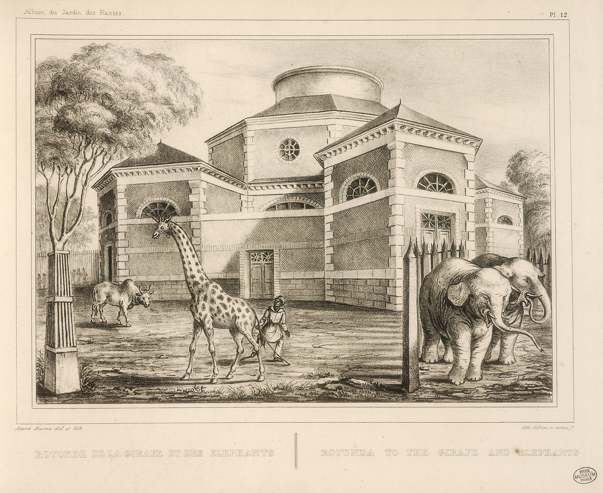 History Of The Menagerie The Zoo Of The Jardin Des Plantes