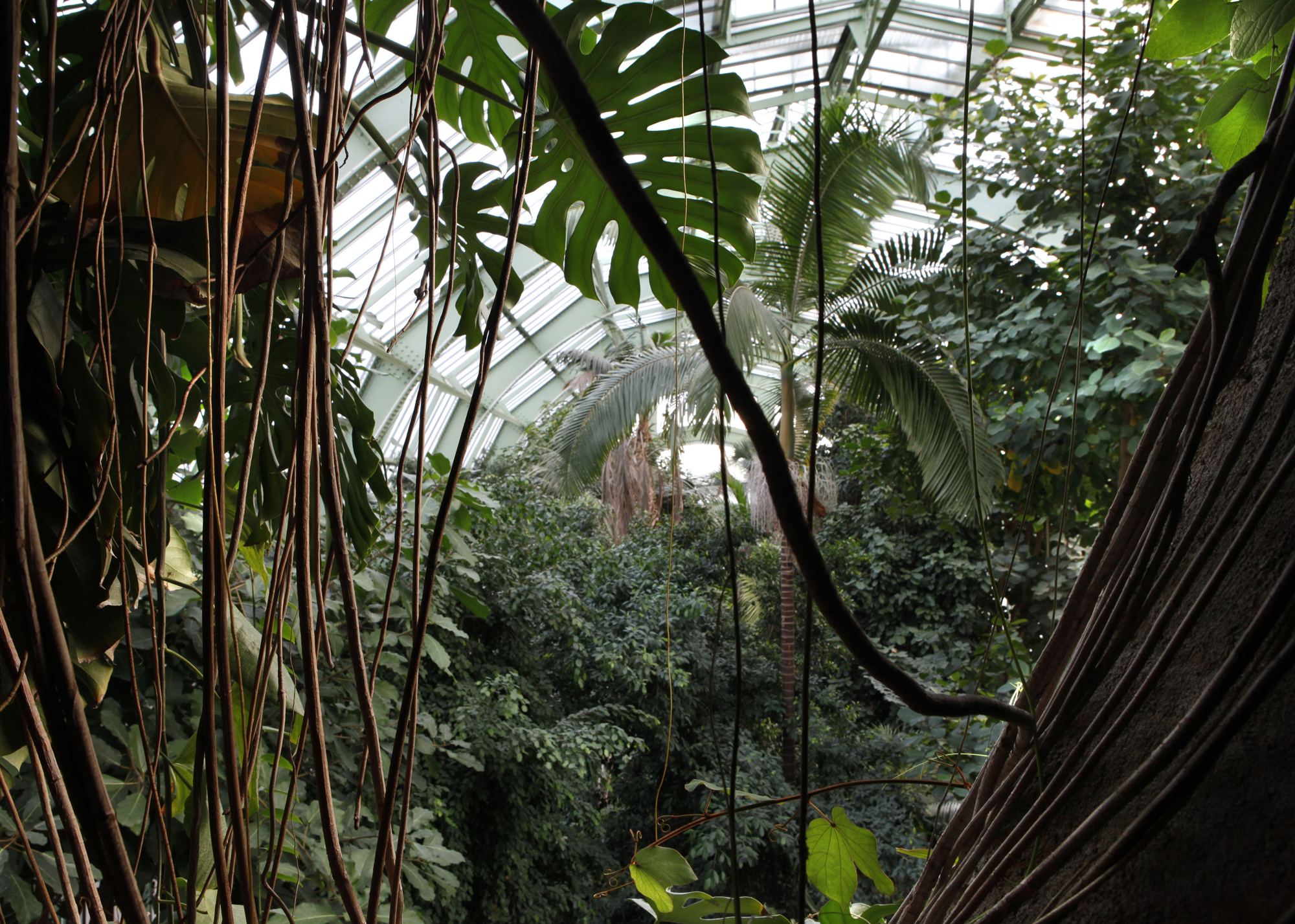 Grandes Serres Du Jardin Des Plantes Greenhouses